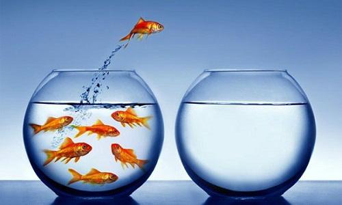 Giải mã giấc mơ: Mơ thấy con cá - VnExpress iOne