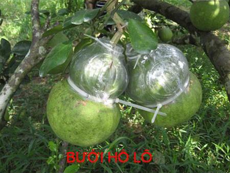 buoiholo-950416-1372927620_500x0.jpg