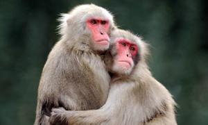 Ngày tình yêu lãng mạn với muôn loài