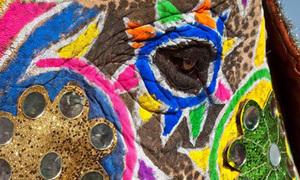 Lễ hội voi thi nhau ăn diện ở Ấn Độ