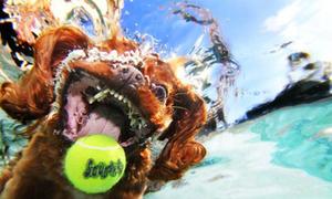 Chó biến thành 'hung thần biển cả'