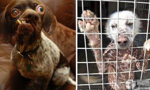 Những con vật 'quái dị' đáng thương bị 'phân biệt đối xử'