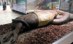 Thực hư quái thú trăn ăn thịt người ở Amazon