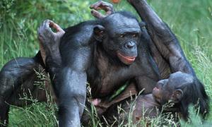 Động vật giao phối như thế nào? (2)