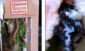 Kinh hoàng ăn phải chuột chết trong bánh sandwich
