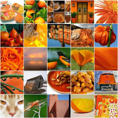 orange-798871-1372656485_500x0.jpg