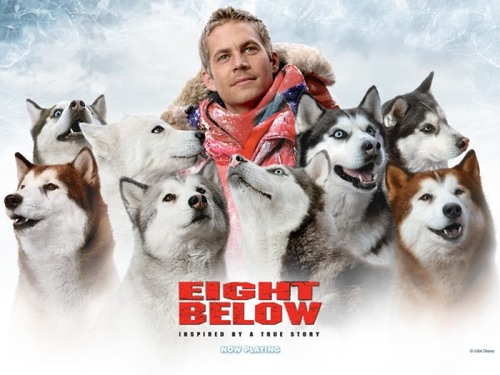 eightbelow1-482812-1372633205_500x0.jpg