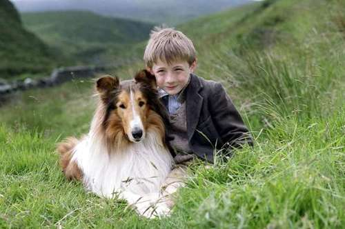 lassie-196494-1372633205_500x0.jpg