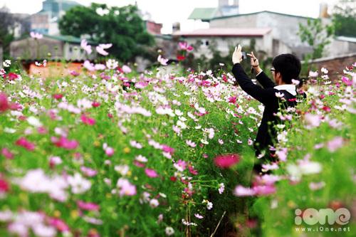 gioi-tre-chen-chan-chup-vuon-hoa-9-79536