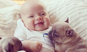 Hình ảnh siêu yêu của em bé và ba bạn cún