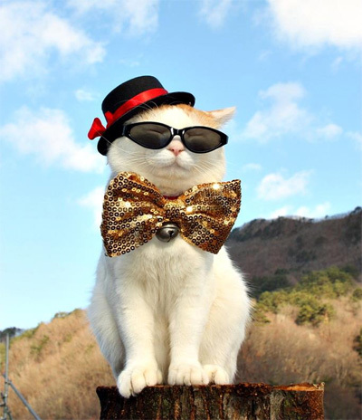 cat10-418494-1372433524_500x0.jpg