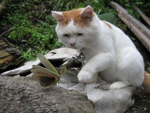 cat9-614121-1372433523_500x0.jpg