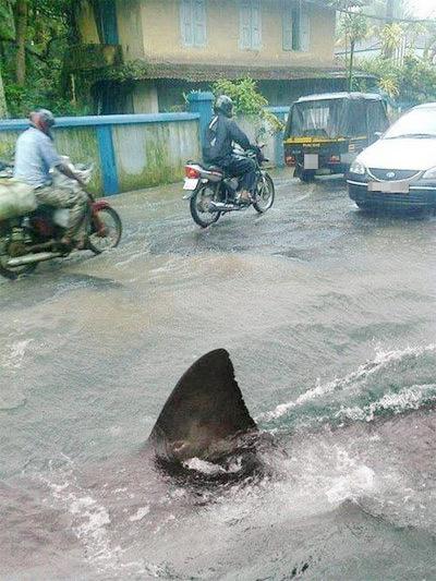 Huhu, cá mập ở đâu tràn lên đây vậy.