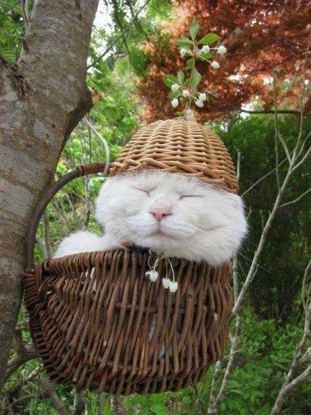cute-animal-pics-part153-7-1376550730_500x0.jpg