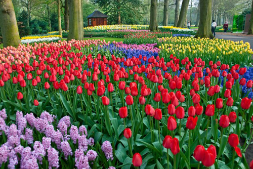 Keukenhof-Gardens-The-Netherlands-137783
