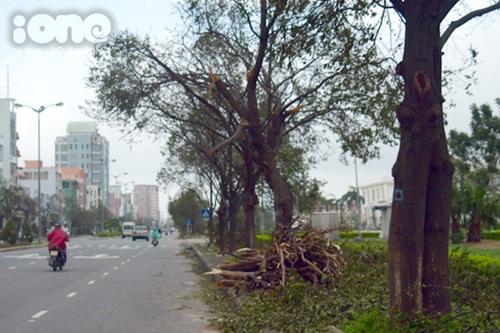 Hai ngày sau khi cơn bão số 11 đổ bộ vào khu vực miền Trung, đường phố ở khu vực trung tâm và ven bờ biển Đà Nẵng vẫn còn ngổn ngang cây cối, trụ điện, đất đá, cát biển... do ảnh hưởng của cơn bão gây ra.