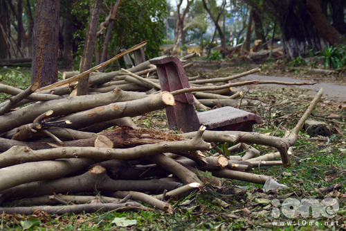 Theo chia sẻ một một bác bảo vệ công viên, đây là lần cây xanh bị ngã đổ nặng nhất từ sau bão Xangsane vào năm 2006. Hàng trăm gốc cây xà cừ, dừa, phượng... đã ngã đổ.