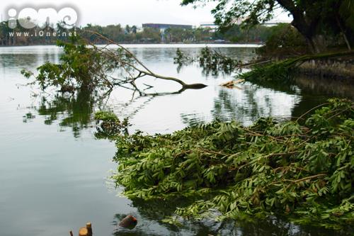 Công viên cây xanh lớn nhất thành phố Đà Nẵng tiêu điều sau bão.