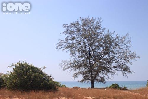 Bãi Dài, bãi biển được ABC News (Australia) bình chọn là một trong những bãi biển sạch, đẹp, hoang sơ nhất thế giới