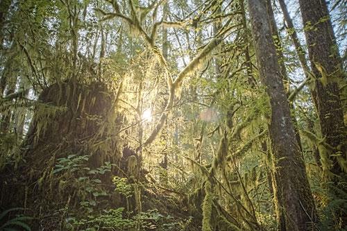 Xuôi về phía Nam của hồ là khu rừng Olympic. Đi về phía Bắc là công viên quốc gia Olympic, nơi được xem là một trong những vùng đất hoang dã nhất trên đất Mỹ.