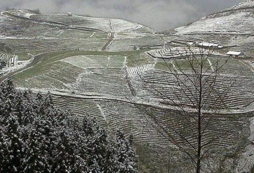 Các khu ruộng bậc thang bao phủ trong tuyết,