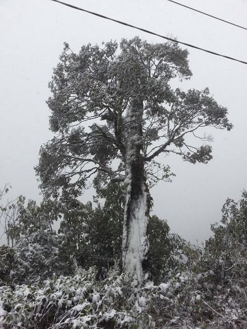 Tuyết rơi bám thành từng mảng trên cây.