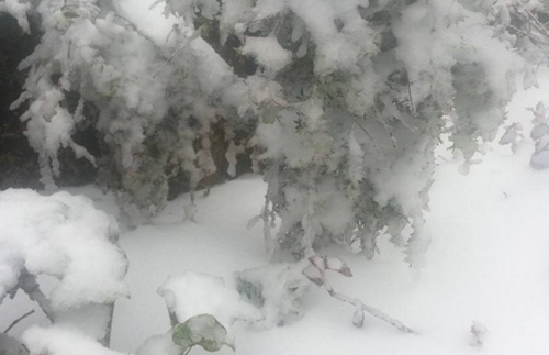 Tuyết bám thành từng mảng trên những đồng ruộng hoa màu.