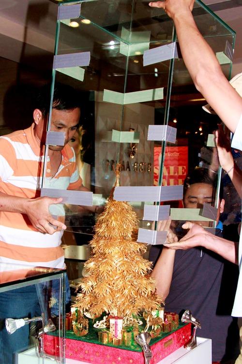 Đội kỹ thuật cho cây thông vào lồng kính trước khi đưa ra trưng bày.
