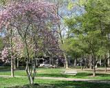 park-9056-1388393473.jpg