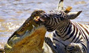 Khoảnh khắc động vật hả hê săn được mồi xịn