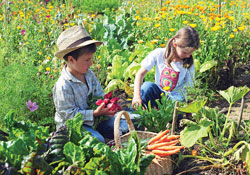 grow-vegatables-3635-1391681564.jpg
