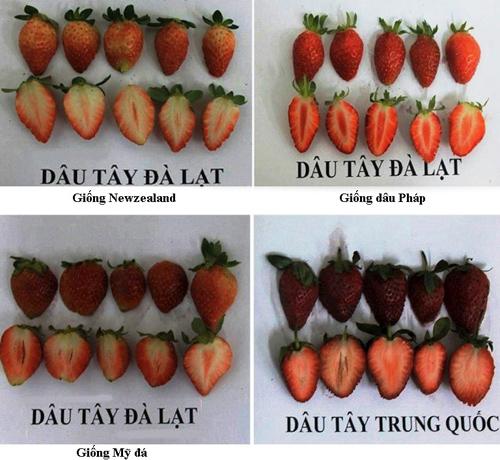 Bo-doi-dau-tay-DL-TQ-1490-1392809254.jpg