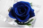 co-don-2206-1393906585.jpg