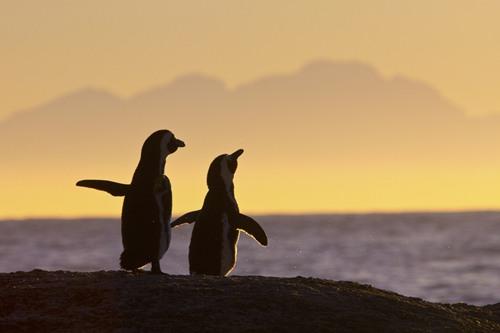 Cặp đôi này đang cùng ngắm khoảnh khắc yên bình của hoàng hôn xứ nhiệt đới.