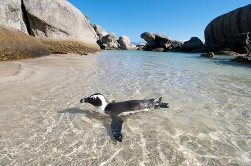 Khu vực này có những tảng đá granite lớn, che chắn gió và sóng, tạo thành những hồ bơi tự nhiên an toàn và tĩnh lặng.