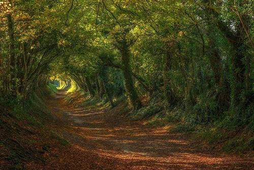 Đường dẫn đến cối xay gió Halnaker tại Sussex (Anh).