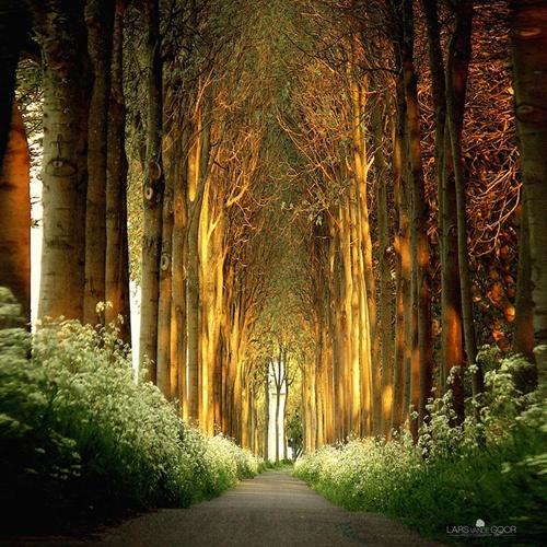 Đường hầm thân cây cao ở Hà Lan.