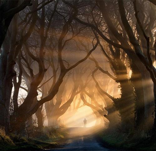 Đường cây cối nằm ở phía bắc Ireland.