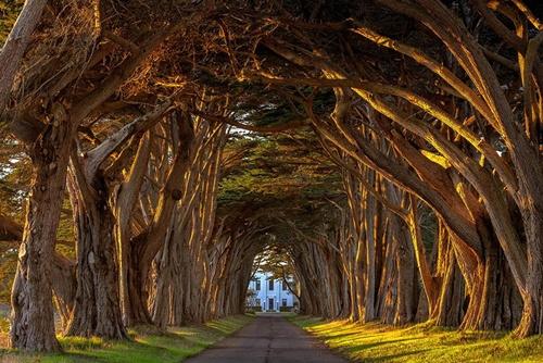 Đường cây Cypress tại nhà ga Marconi, California (Mỹ).