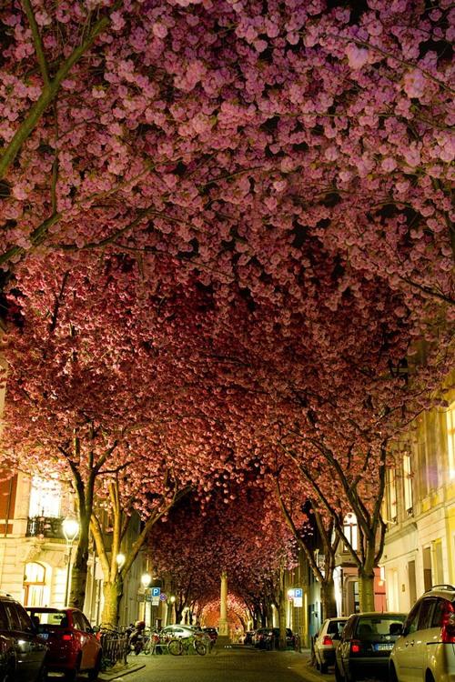 Đường phố ở Bonn (Đức).