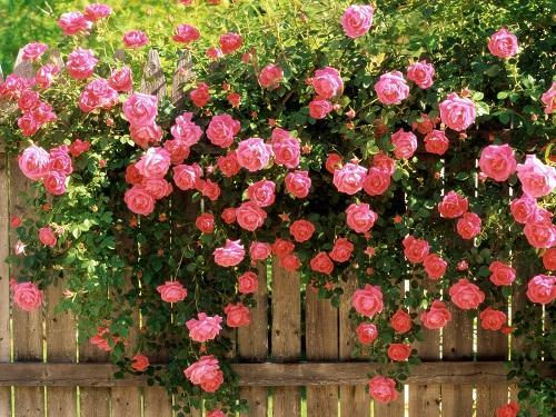 Giấc mộng thấy hoa và những điều cần biết