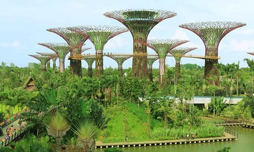Ảnh: wiki Khu vực ngoài trời là hệ thống 36 siêu cây nhân tạo khổng lồ Supertree Grove, hồ Chuồn chuồn và Chim bói cá (Dragonfly and Kingfisher Lake). Hiện nay, công trình này đã được hoàn thành 18 siêu cây đầu tiên.