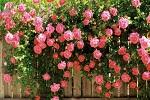 132316139516511600flower30121-7332-9514-
