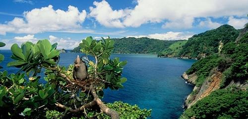 Cocos là một hòn đảo không người ở nằm ngoài khơi bờ biển của Costa Rica. Hòn đảo này là công viên quốc gia có khu vực lặn biển tốt nhất thế giới.