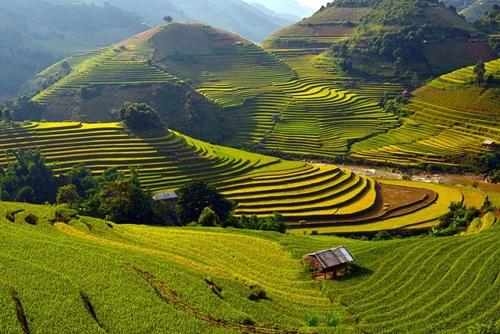Mù Cang Chải là một huyện miền tây tỉnh Yên Bái, nằm dưới chân dãy núi Hoàng Liên Sơn ở độ cao 1.000 mét so với mực nước biển. Mù Cang Chải hút hồn du khách bởi vẻ đẹp nên thơ của những thửa ruộng bậc thang trổ vàng hút tầm mắt