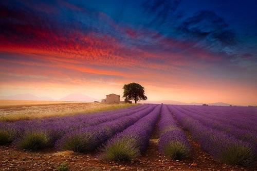 Provence là một vùng nằm ở phía đông nam nước Pháp với nhiều thành phố du lịch nổi tiếng. Điều đầu tiên khi nhắc đến nơi đây là những cánh đồng hoa oải hương rộng mênh mông.