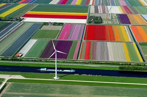 Bất cứ ai khi đến thăm Vùng Lisse, miền tây đất nước Hà Lan đều bị mê hoặc bởi những cánh đồng hoa tulip sống động, rực rỡ màu sắc.
