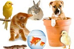 groupofpets-1398646154-1398646-7678-2068