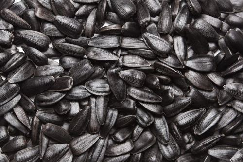 Sunflower-seeds-7463-1399163856.jpg