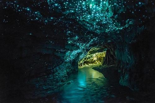 Hang động Waitomo Glowworm: thuộc đảo Bắc, New Zealand nổi tiếng với vô vàn những con đom đóm phát ra ánh sáng kỳ diệu.